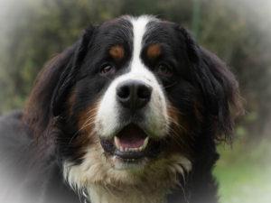 Neue Bilder im Tiershooting Bereich